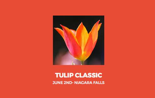 tulip-classic